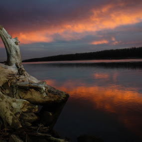 Drifted by Laura Gardner - Novices Only Landscapes ( clouds, water, driftwood, 2014, sunset, nd, fall, pink, missouri river, evening, river, , mood factory, color, lighting, moods, colorful, light, bulbs, mood-lites )
