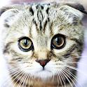 Nice kittens icon