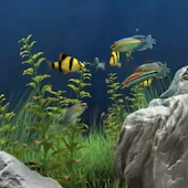 Dream Aquarium Live Wallpaper