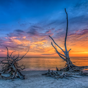 Driftwood Trees at Dusk by Bill Camarota - Landscapes Beaches ( Beach, sunset, blue, water, ocean.  )