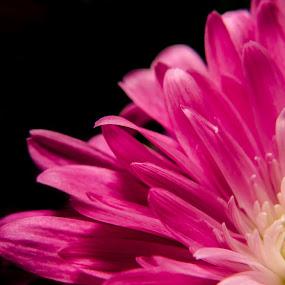 Off the edge by RomanDA Photography - Flowers Single Flower ( flowers,  )