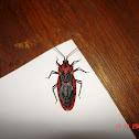 Termite Assassin Bug