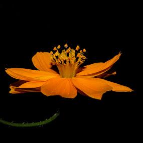TURKEY  flowers by Ahmet Güler - Nature Up Close Flowers - 2011-2013 ( turkey  flowers,  )
