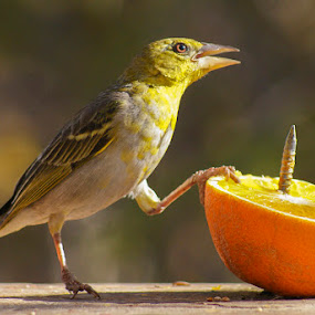 Lunch by Elsa van Dyk - Animals Birds