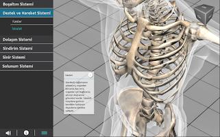 Screenshot of İnsan Vücudu Atlası