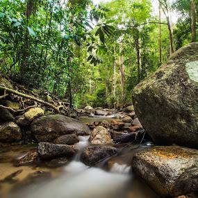 by Stephen Ckk - Landscapes Forests