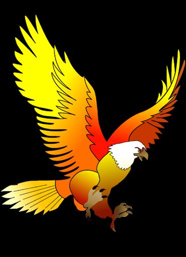 King Bird KSA