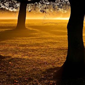 Stray Sunrise by John Ash - Landscapes Sunsets & Sunrises ( harrogate, tree, sunrise, stray, golden )