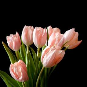 by Abah otox Baratawiria - Flowers Flower Arangements ( otox )