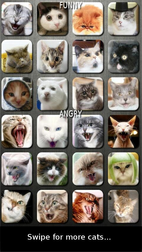 Cat and Kitten Soundboard - screenshot