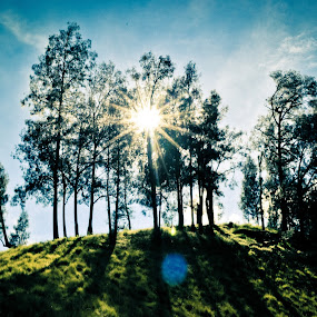 sun and forest by Nur Saputra - Landscapes Forests