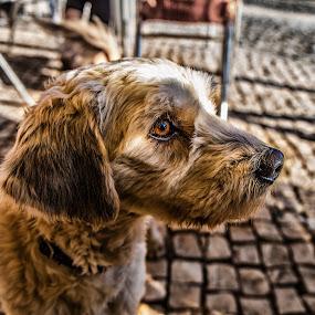 Beste friend by Miguel Pires - Animals - Dogs Portraits ( dog best friend color )