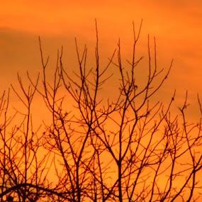 Branches of Acacia Wakes Up on Slightly Sunrise by Nat Bolfan-Stosic - Uncategorized All Uncategorized ( acacia, tree, wakes up, sunrise, branches )