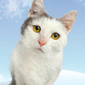 Moe, The Famous Studio Cat! by Jack Turkel - Animals - Cats Portraits ( yellow green eyes, cat in studio, white cat )
