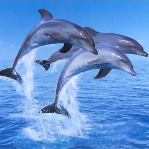 Delfines Live Wallpaper es 1 LOGO-APP點子
