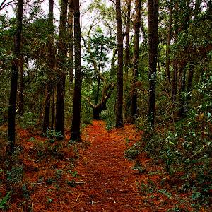 Forrest 2.jpeg