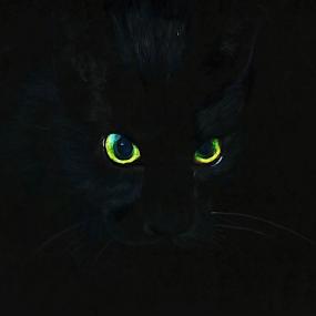 Black Cat by Ganesh LK - Drawing All Drawing