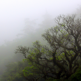 The mist by Ramesh Kallampilly - Nature Up Close Other Natural Objects (  )