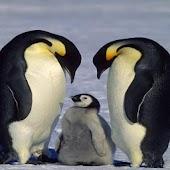 Antarctica: A Photographic Jou