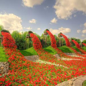 Flower Buckets @ Miracle Garden, Dubai,U.A.E.jpg