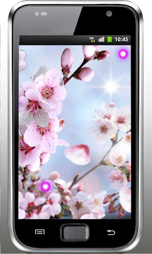 Sakura Bunga live wallpaper