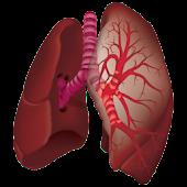 Ausculta Pulmonar
