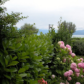 Garden Center Castiello