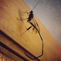 Glossy black wasp