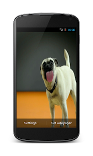 Dogs licking screen LWP HD - screenshot thumbnail