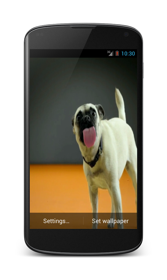 Dogs licking screen LWP HD - screenshot
