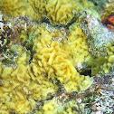 Corrugated Coral