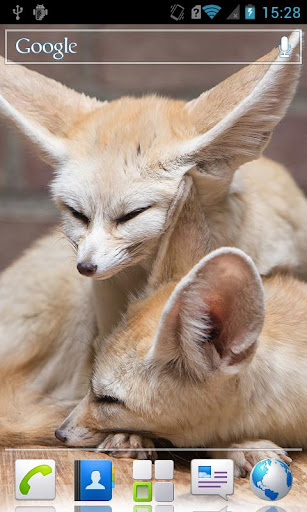 Fennec foxes HD Live wallpaper