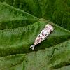 Elegant Grass-veneer