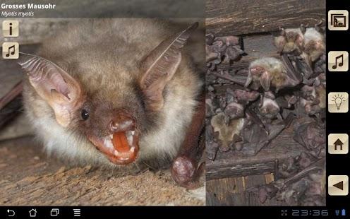 Swiss Bats - screenshot thumbnail