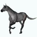 Equideow icon