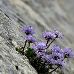 by Eva  Doe - Flowers Flowers in the Wild