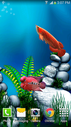Download Arowana Fish 3d Live Wallpaper For Pc