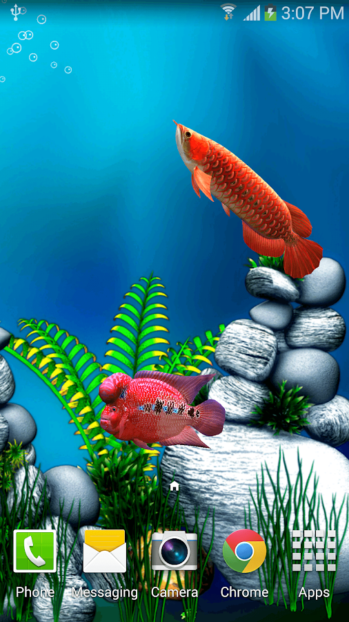 arowana fish 3d live wallpaper android apps on google play