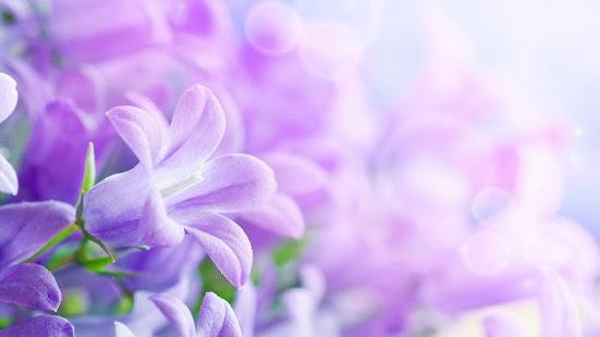 紫丁香花卉動態壁紙
