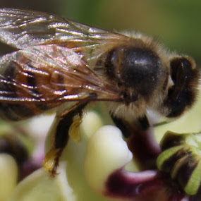 by Jackie Terrell Mosley - Nature Up Close Hives & Nests (  )