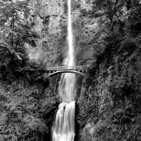 Multnomah Falls by Steve Rogers - Black & White Landscapes ( oregon, waterfalls, waterfall, avalon-art.com )