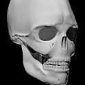 Bones Human 3D (anatomy) icon