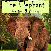 Elephant Facts Q&A for Kids