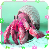 Hermit crab Jigsaw Puzzles