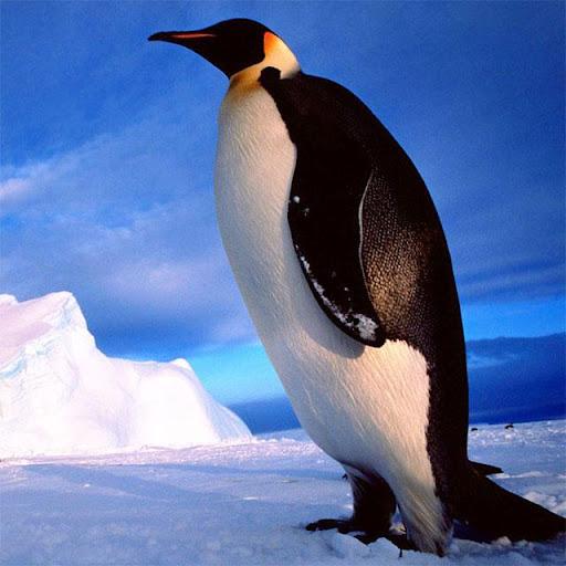 企鵝拼圖|玩解謎App免費|玩APPs