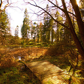 Grizedale forest - Tarn by Mark Airey - Landscapes Forests ( tarn, grizedale, afternoon sun, d7000, trees, forest, nikon, sunlight, pond, woods, sigma 10-20mm )