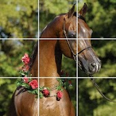Thoroughbred Horse Puzzle