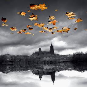 Salamanca by Alexandru Ciornea - Nature Up Close Water ( salamanca )