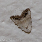 Jersey Black Arches