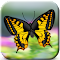 Butterflies Catch Craze 3D 1.0 Apk